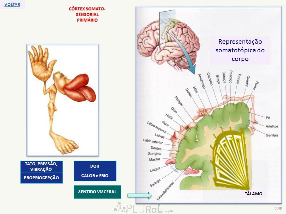 CÓRTEX SOMATO- SENSORIAL PRIMÁRIO TÁLAMO Representação somatotópica do corpo TATO, PRESSÃO, VIBRAÇÃO DOR CALOR e FRIO PROPRIOCEPÇÃO SENTIDO VISCERAL V