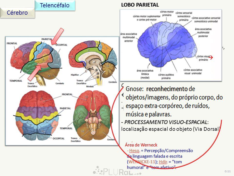 Cérebro Telencéfalo LOBO PARIETALLOBO PARIETAL Córtex Sensorial Somestésico Primário e Córtex Associativo Sensorial Somestésico (9) Córtices Primário