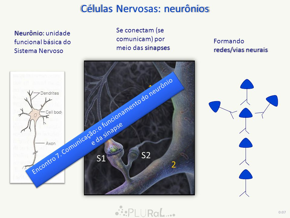 Células Nervosas: neurônios NeurônioNeurônio: unidade funcional básica do Sistema Nervoso 1 2 S1 S2 sinapses Se conectam (se comunicam) por meio das s