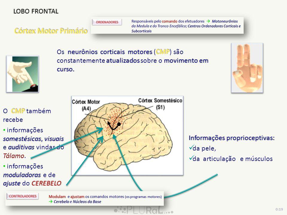 Informações proprioceptivas:Informações proprioceptivas: da pele, da articulação e músculos LOBO FRONTAL 0:19