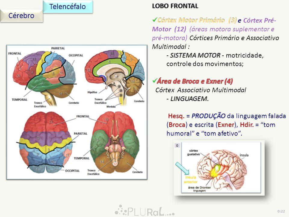 Cérebro Telencéfalo 0:22