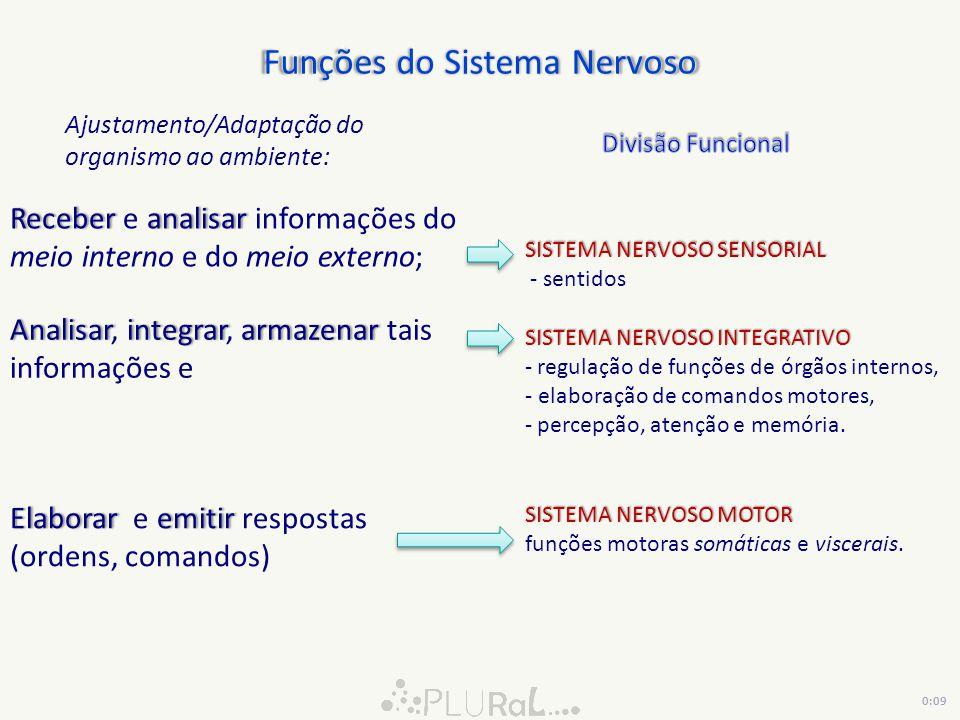 Sistema Nervoso Central Trazem informação SENSITIVA Sistema Nervoso Central Levam informação MOTORA Trazem informação SENSITIVA Sistema Nervoso Sensorial Somático Sistema Nervoso Sensorial Visceral Sistema Nervoso MOTOR Visceral: SN Simpático SN Parassimpático INFORMAÇÕES do AMBIENTE EXTERNO energia formas de energia Impulsos Nervosos INFORMAÇÕES do AMBIENTE INTERNO energia formas de energia Impulsos Nervosos SistemaNervosoSistemaNervoso Pele, músculos, tendões, articulações, órgãos dos sentidos VíscerasVísceras Músculos lisos, cardíaco e glândulas Comandos/Ordens Sistema Endócrino 0:12