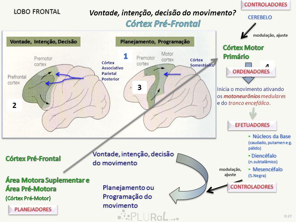 Vontade, Intenção, DecisãoVontade, Intenção, Decisão motoneurônios Inicia o movimento ativando os motoneurônios medulares e do tronco encefálico. Plan