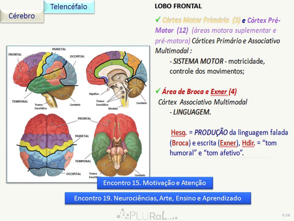 Cérebro Telencéfalo 0:28 Encontro 19. Neurociências, Arte, Ensino e Aprendizado Encontro 15. Motivação e Atenção