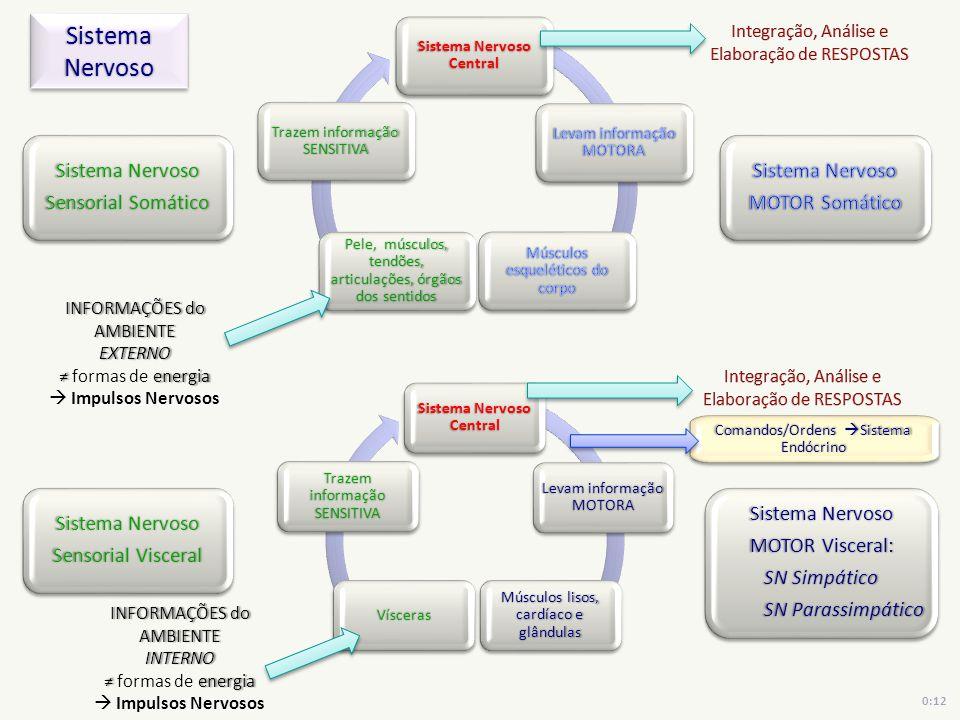 Sistema Nervoso Central Trazem informação SENSITIVA Sistema Nervoso Central Levam informação MOTORA Trazem informação SENSITIVA Sistema Nervoso Sensor