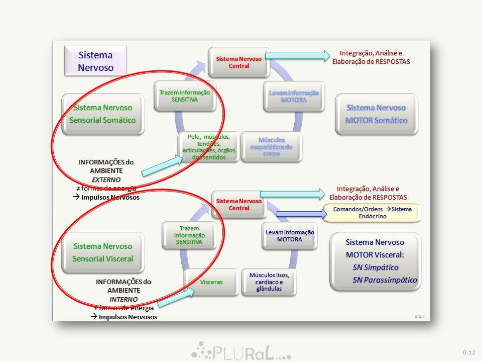 LOBO OCCIPITAL VISÃO VIA DORSAL (ONDE ESTÁ) Identificação da Localização Espacial do Objeto VIA VENTRAL (O QUE É) Identificação do Objeto LOBO PARIETAL LOBO TEMPORAL Unimodal Processamento de informações VISUO-ESPACIAIS Córtex Associativo Multimodal Unimodal 0:02 Córtex Associativo Multimodal