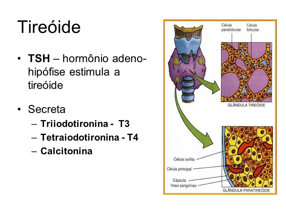 TSH – hormônio adeno- hipófise estimula a tireóide Secreta –Triiodotironina - T3 –Tetraiodotironina - T4 –Calcitonina