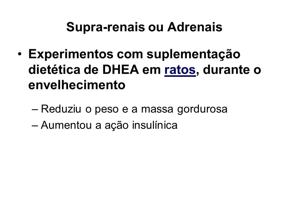Supra-renais ou Adrenais Experimentos com suplementação dietética de DHEA em ratos, durante o envelhecimento –Reduziu o peso e a massa gordurosa –Aume