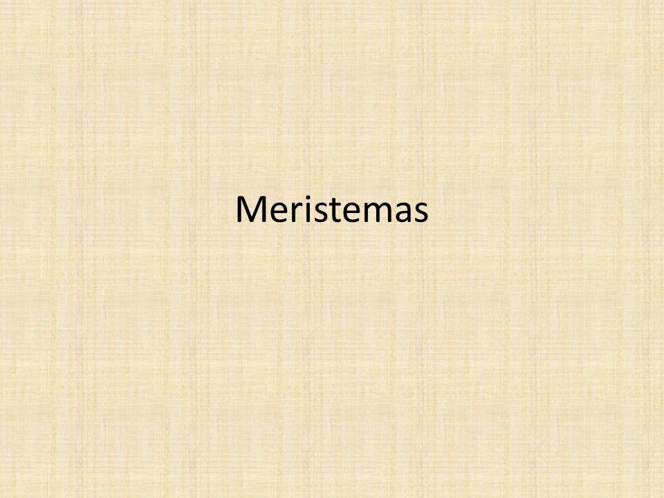 Conceito Meristemas são regiões localizadas no corpo do vegetal responsáveis pelo seu crescimento; São, portanto, regiões ativas na divisão, no crescimento e na diferenciação celulares; São classificados em primários (origem embrionária) ou apicais; e, ainda em secundários (origem em tecidos maduros), também chamados de laterais devido a sua posição.