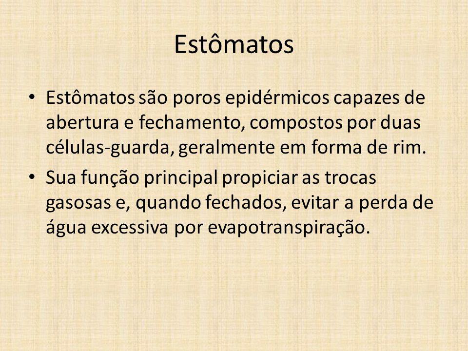 Estômatos Estômatos são poros epidérmicos capazes de abertura e fechamento, compostos por duas células-guarda, geralmente em forma de rim. Sua função