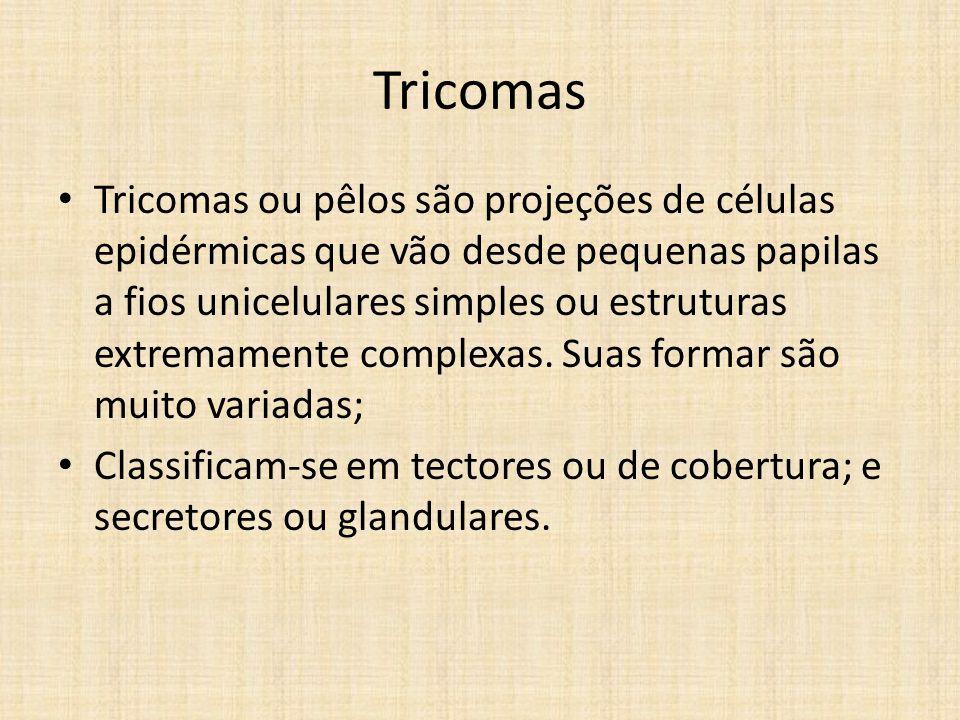 Tricomas Tricomas ou pêlos são projeções de células epidérmicas que vão desde pequenas papilas a fios unicelulares simples ou estruturas extremamente