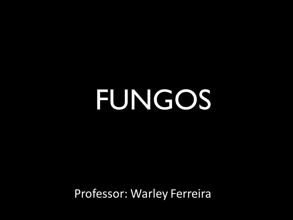 FUNGOS Professor: Warley Ferreira