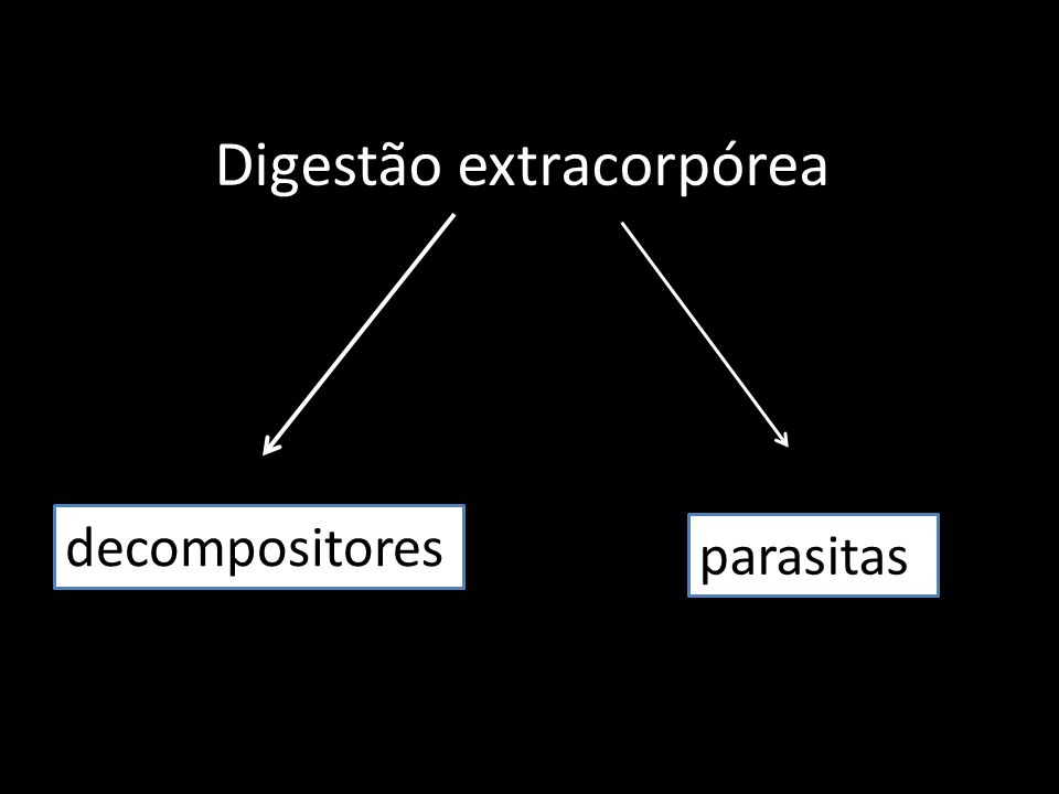 Digestão extracorpórea decompositores parasitas