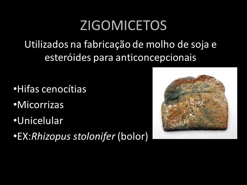 Reprodução dos ZIGOMICETOS