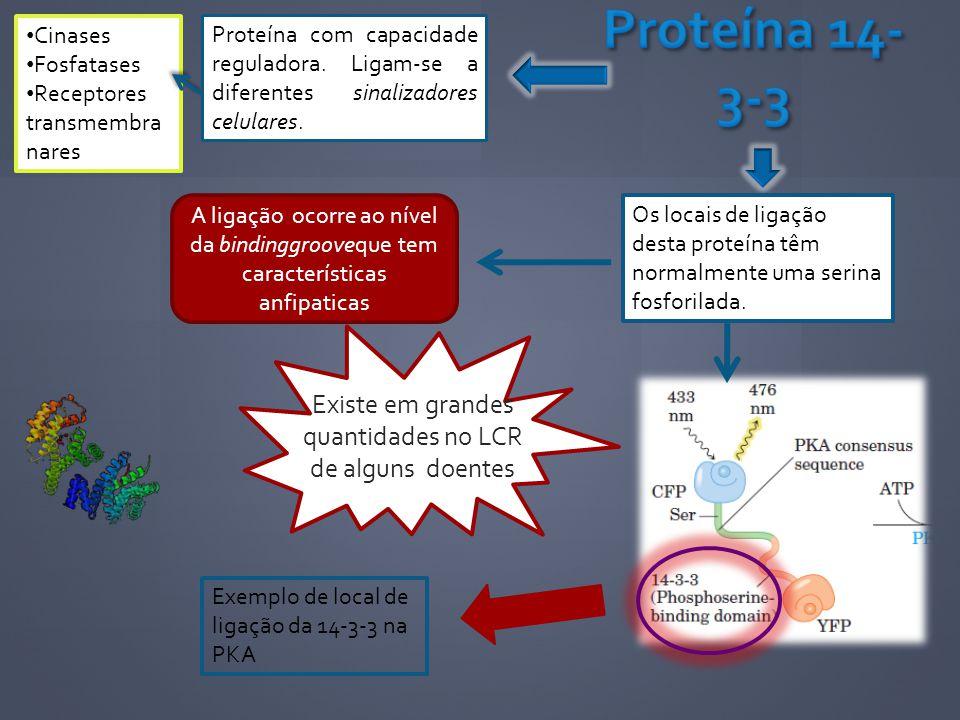 Proteína com capacidade reguladora. Ligam-se a diferentes sinalizadores celulares. Cinases Fosfatases Receptores transmembra nares Os locais de ligaçã
