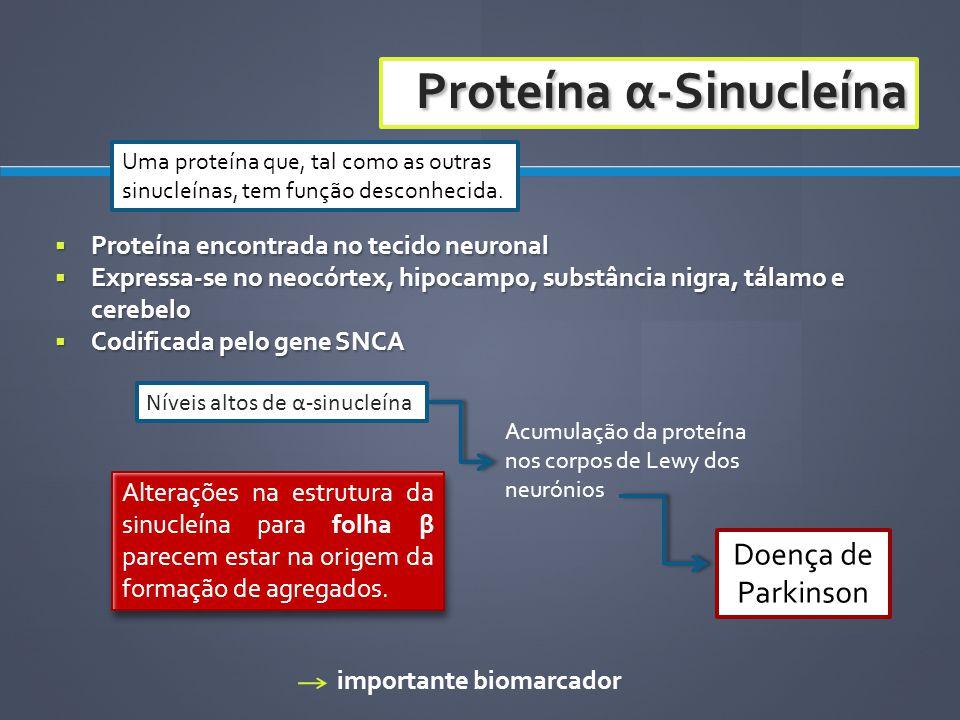 Proteína encontrada no tecido neuronal Proteína encontrada no tecido neuronal Expressa-se no neocórtex, hipocampo, substância nigra, tálamo e cerebelo