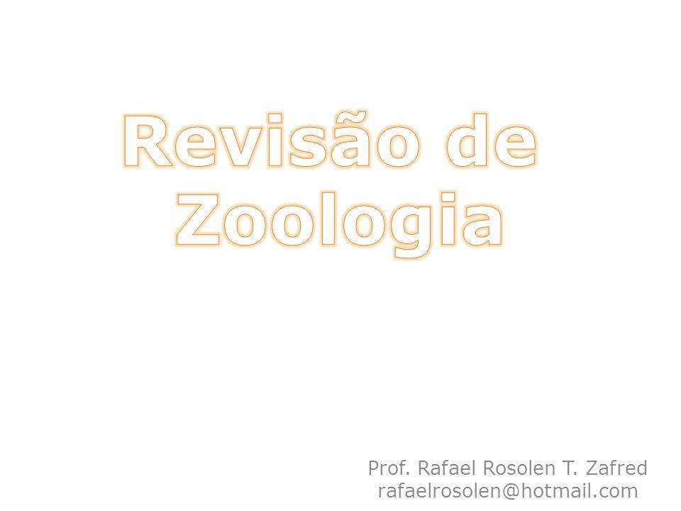 Prof. Rafael Rosolen T. Zafred rafaelrosolen@hotmail.com