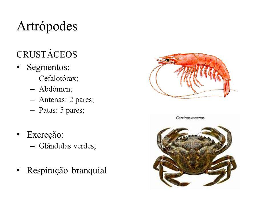 Artrópodes CRUSTÁCEOS Segmentos: – Cefalotórax; – Abdômen; – Antenas: 2 pares; – Patas: 5 pares; Excreção: – Glândulas verdes; Respiração branquial
