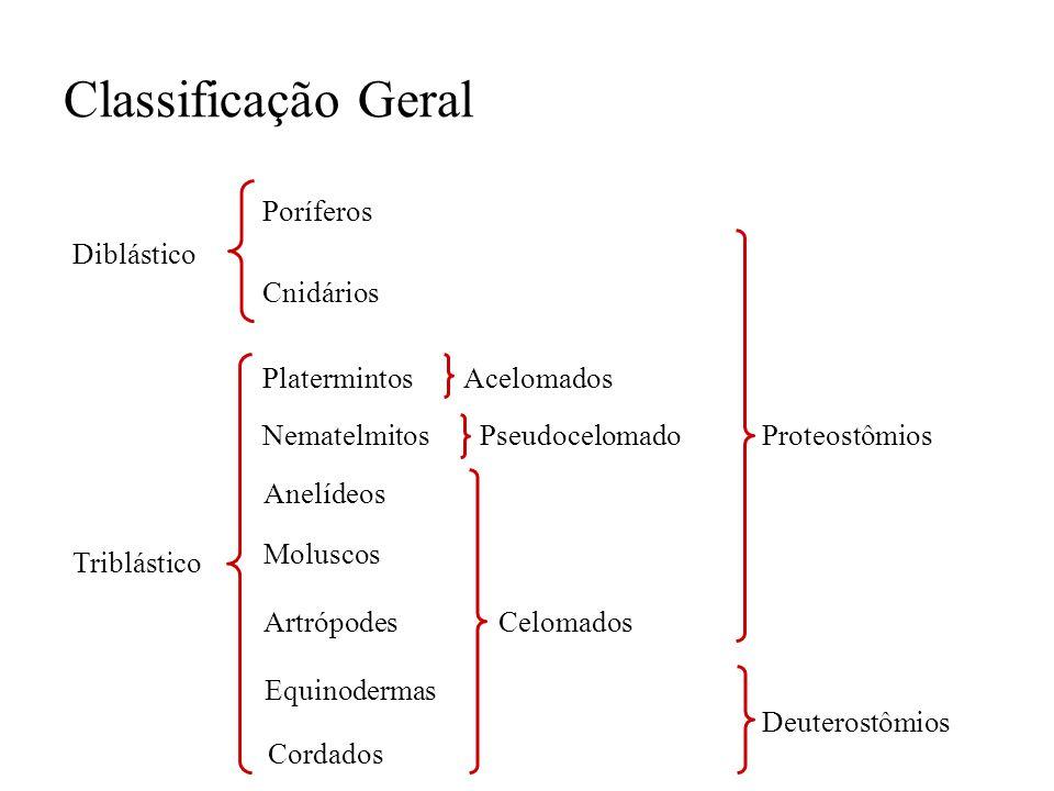 Classificação Geral Diblástico Cnidários Poríferos Triblástico Platermintos Nematelmitos Anelídeos Moluscos Artrópodes Equinodermas Cordados Pseudocel