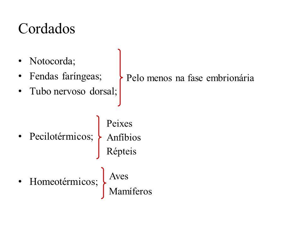 Cordados Notocorda; Fendas faríngeas; Tubo nervoso dorsal; Pecilotérmicos; Homeotérmicos; Pelo menos na fase embrionária Répteis Anfíbios Peixes Aves