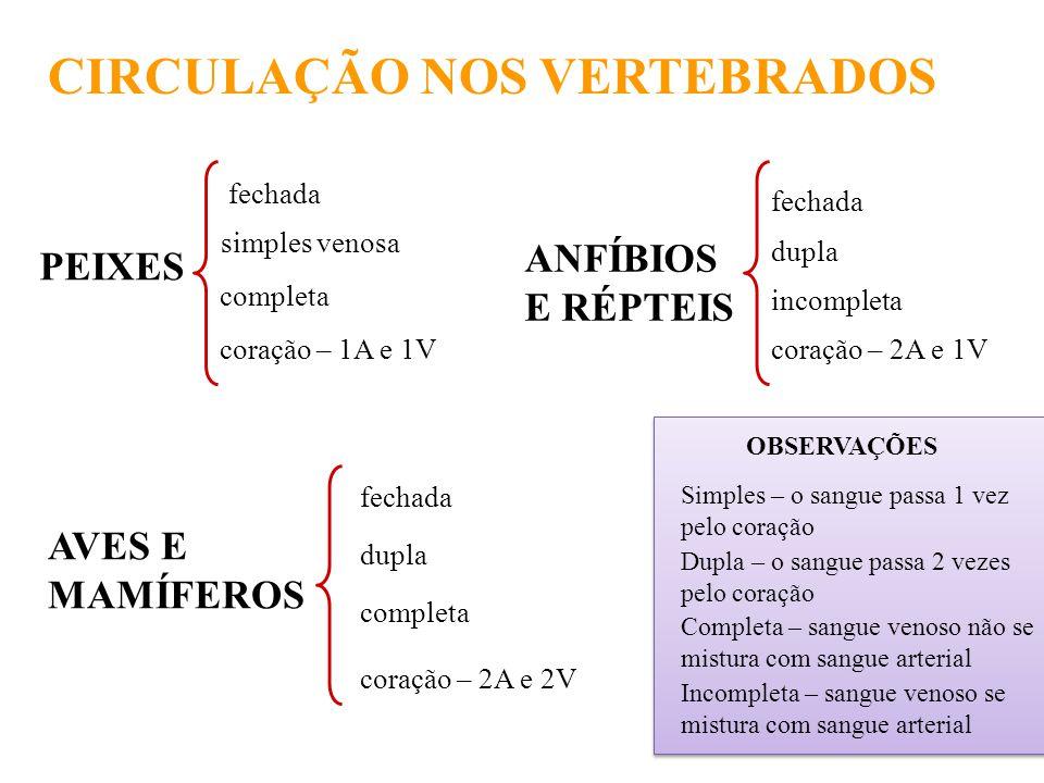 CIRCULAÇÃO NOS VERTEBRADOS PEIXES simples venosa completa coração – 1A e 1V fechada ANFÍBIOS E RÉPTEIS fechada dupla incompleta coração – 2A e 1V AVES