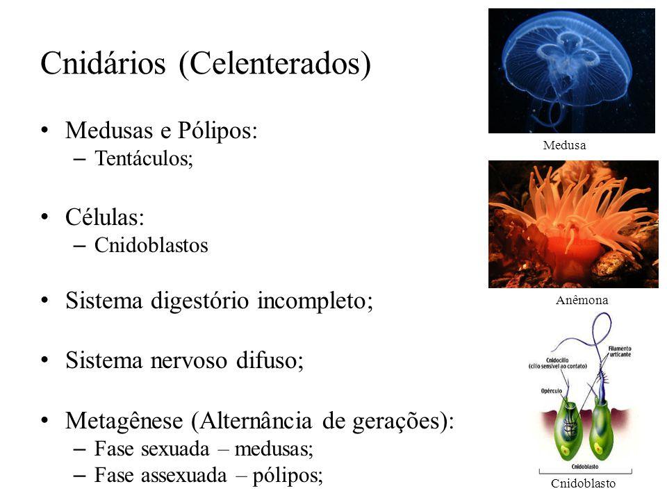 Cnidários (Celenterados) Medusas e Pólipos: – Tentáculos; Células: – Cnidoblastos Sistema digestório incompleto; Sistema nervoso difuso; Metagênese (A