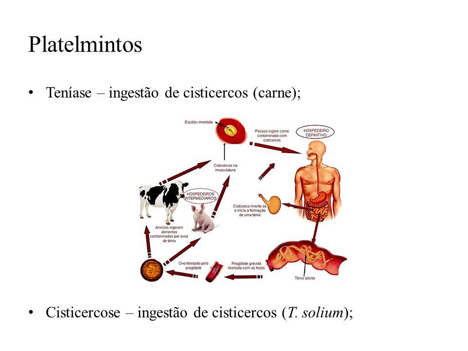 Platelmintos Teníase – ingestão de cisticercos (carne); Cisticercose – ingestão de cisticercos (T. solium);