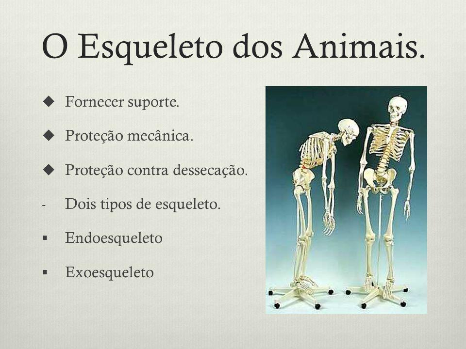 O Esqueleto dos Animais.Fornecer suporte. Proteção mecânica.