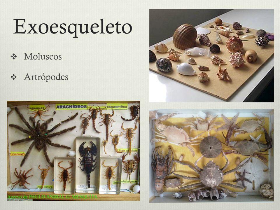 Exoesqueleto Moluscos Artrópodes