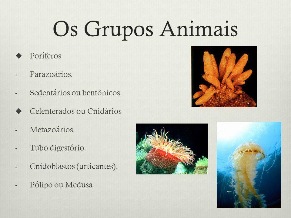Os Grupos Animais Poríferos - Parazoários.- Sedentários ou bentônicos.