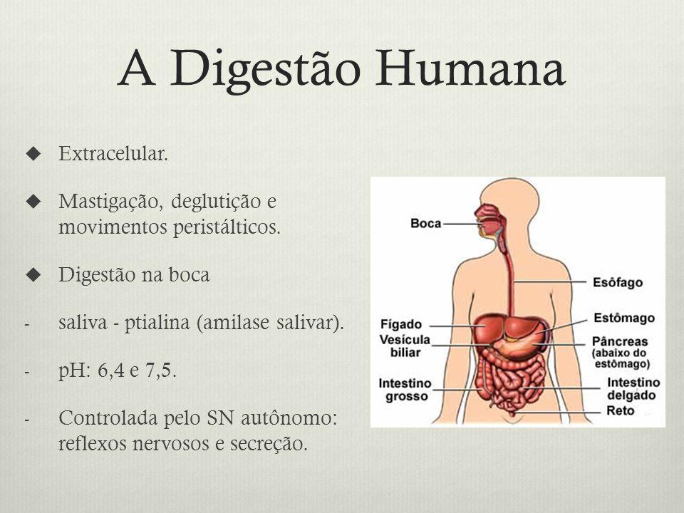 A Digestão Humana Extracelular.Mastigação, deglutição e movimentos peristálticos.