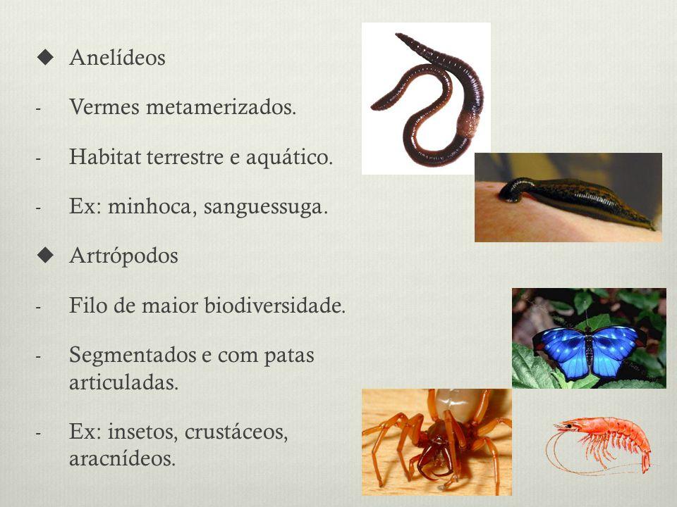 Anelídeos - Vermes metamerizados.- Habitat terrestre e aquático.