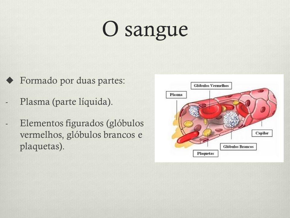 O sangue Formado por duas partes: - Plasma (parte líquida).