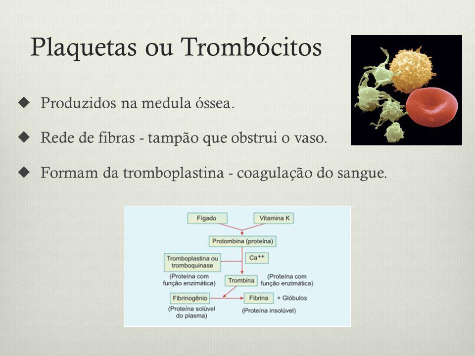 Plaquetas ou Trombócitos Produzidos na medula óssea.