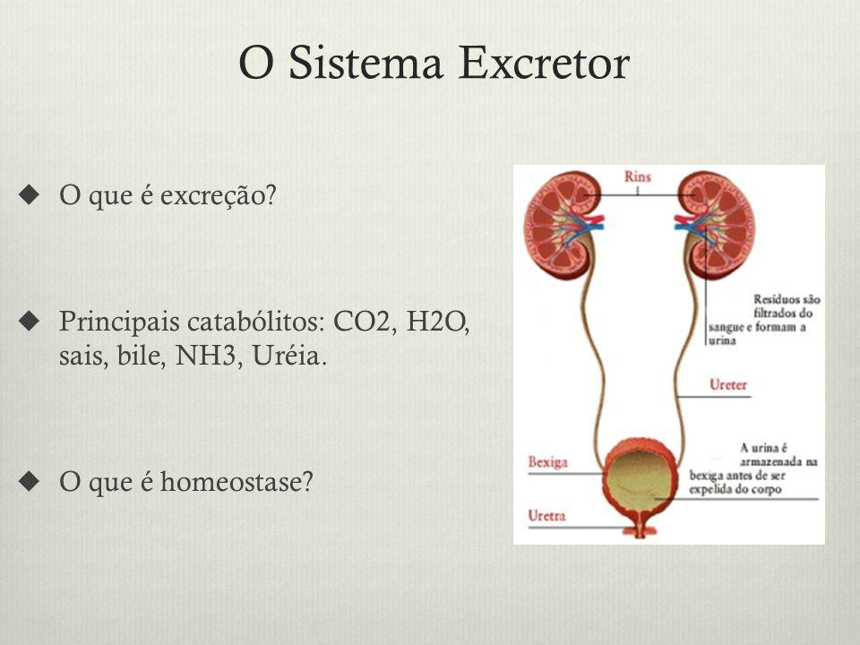 O Sistema Excretor O que é excreção.Principais catabólitos: CO2, H2O, sais, bile, NH3, Uréia.