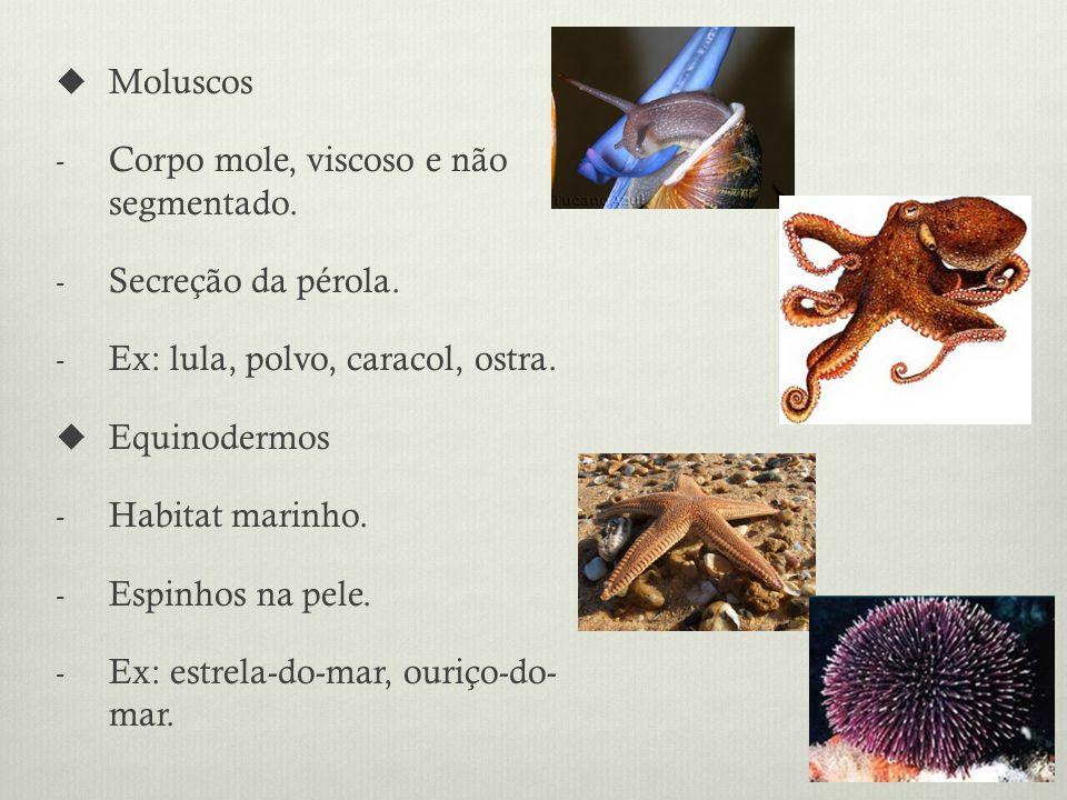 Moluscos - Corpo mole, viscoso e não segmentado.- Secreção da pérola.