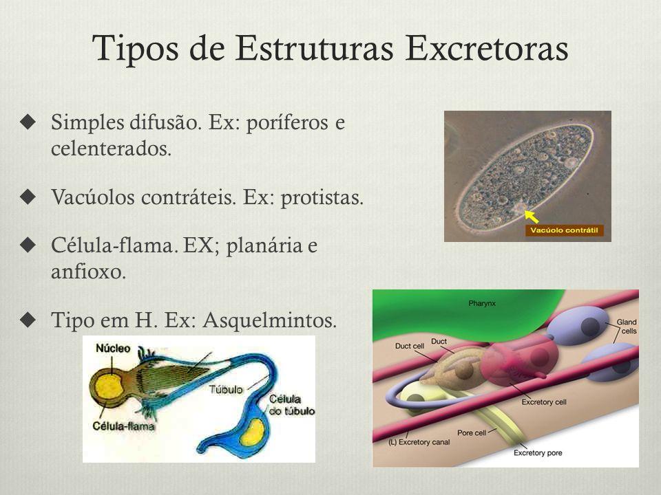 Tipos de Estruturas Excretoras Simples difusão.Ex: poríferos e celenterados.