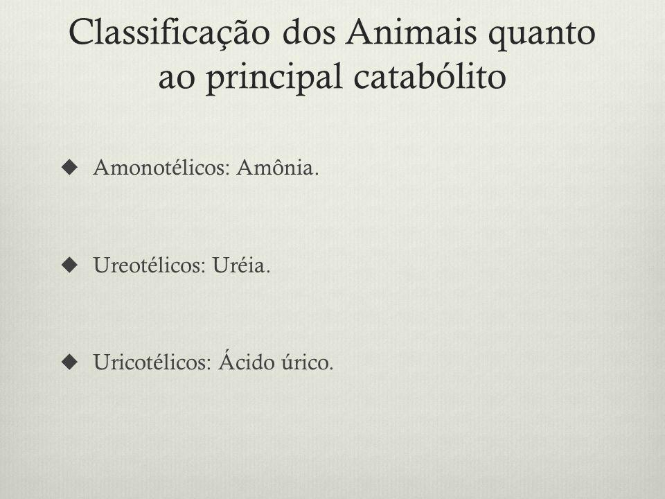 Classificação dos Animais quanto ao principal catabólito Amonotélicos: Amônia.