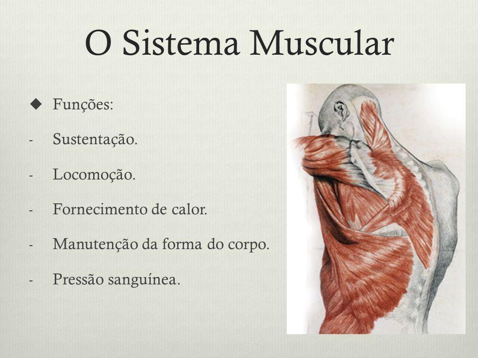 O Sistema Muscular Funções: - Sustentação.- Locomoção.