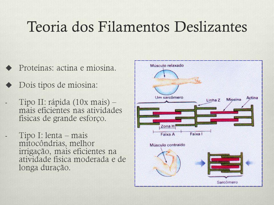 Teoria dos Filamentos Deslizantes Proteínas: actina e miosina.