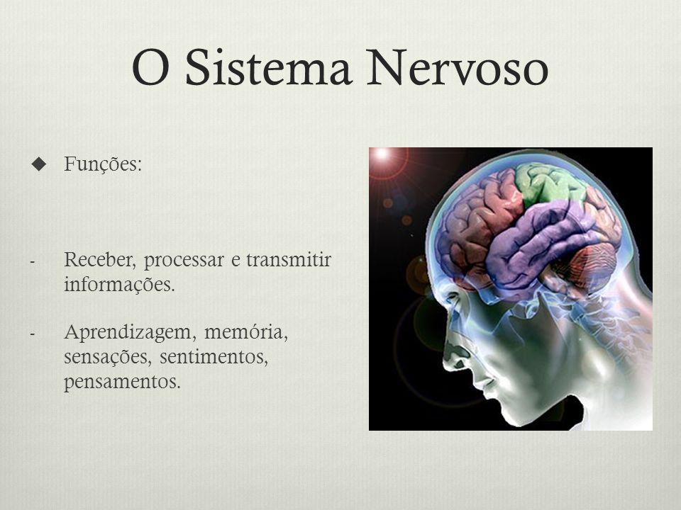 O Sistema Nervoso Funções: - Receber, processar e transmitir informações.