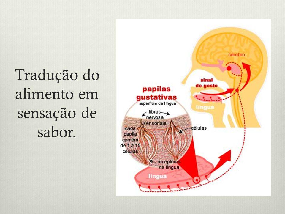 Tradução do alimento em sensação de sabor.