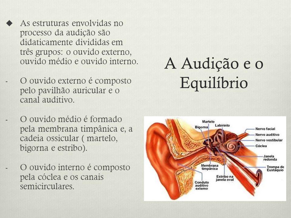 A Audição e o Equilíbrio As estruturas envolvidas no processo da audição são didaticamente divididas em três grupos: o ouvido externo, ouvido médio e ouvido interno.