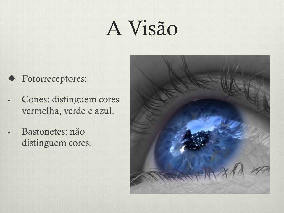 A Visão Fotorreceptores: - Cones: distinguem cores vermelha, verde e azul.