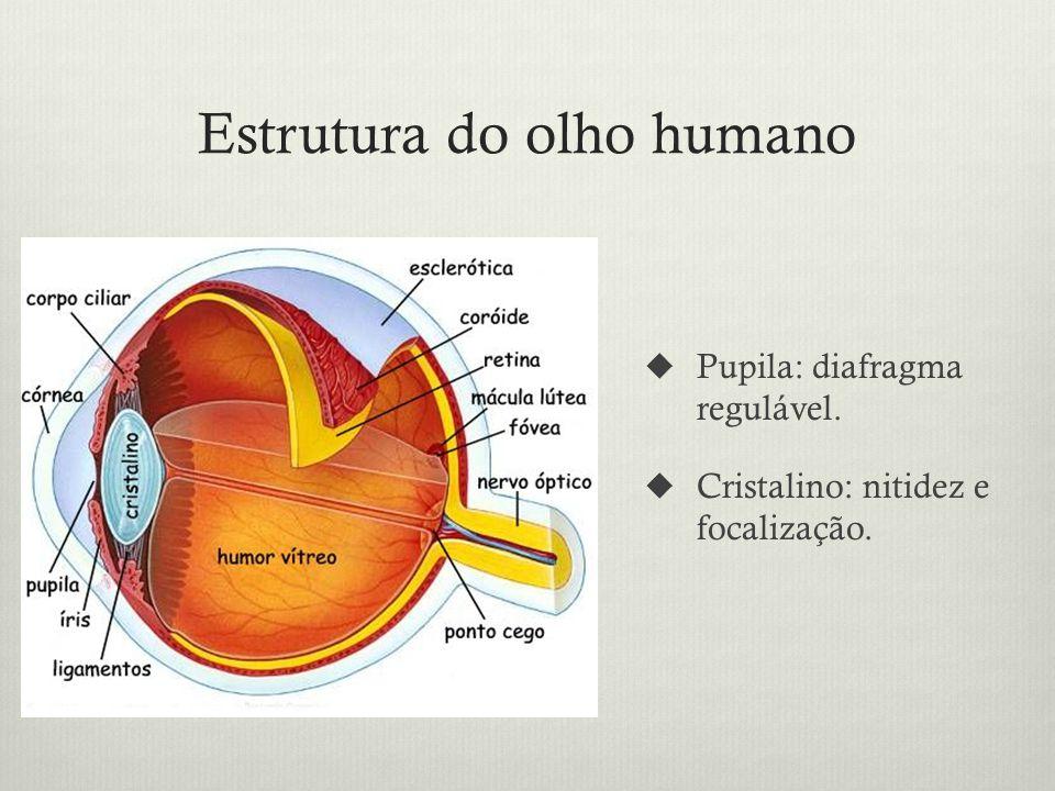 Estrutura do olho humano Pupila: diafragma regulável. Cristalino: nitidez e focalização.