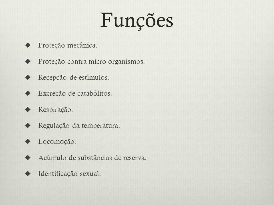 Funções Proteção mecânica.Proteção contra micro organismos.