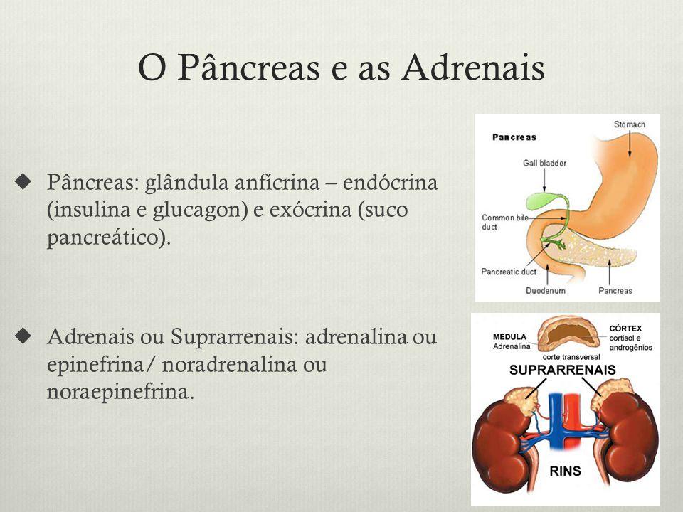 O Pâncreas e as Adrenais Pâncreas: glândula anfícrina – endócrina (insulina e glucagon) e exócrina (suco pancreático).