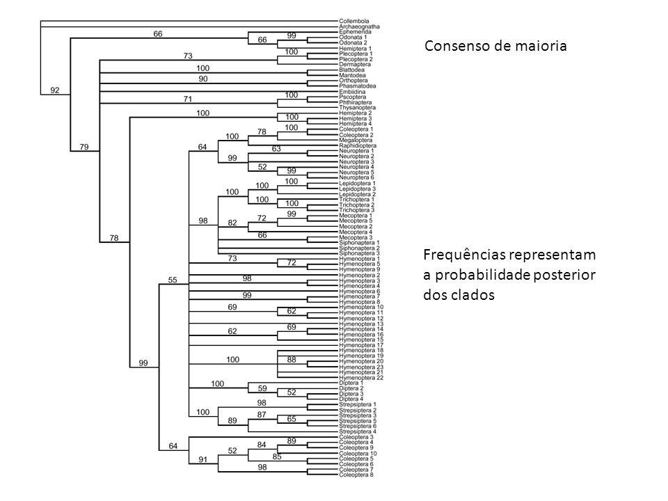 Consenso de maioria Frequências representam a probabilidade posterior dos clados