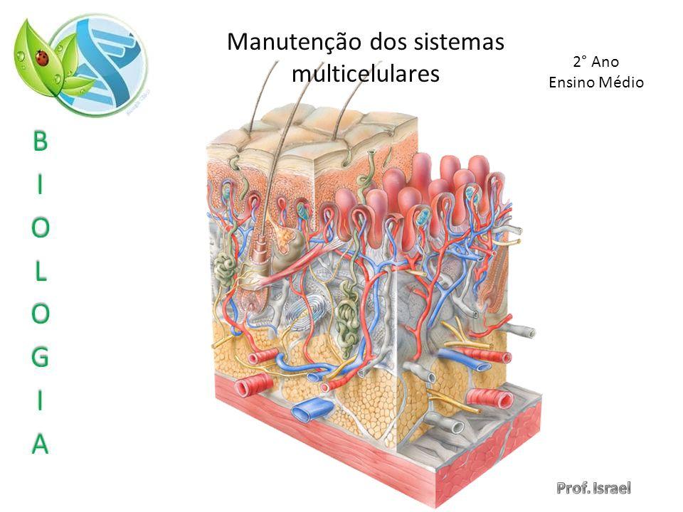Manutenção dos sistemas multicelulares 2° Ano Ensino Médio