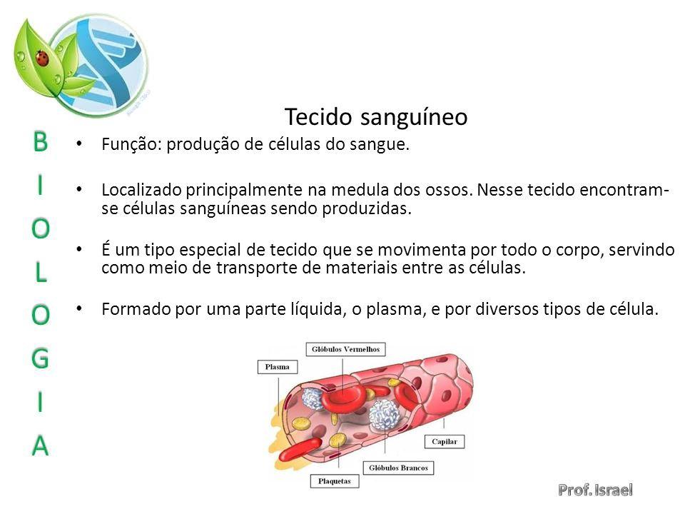 Tecido sanguíneo Função: produção de células do sangue. Localizado principalmente na medula dos ossos. Nesse tecido encontram- se células sanguíneas s